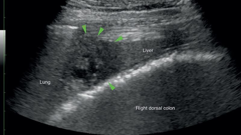 Equine liver disease in the field. Part 2: causes and management