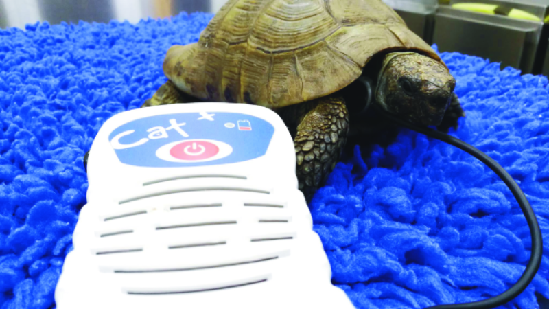 Considerations for humane euthanasia in exotic pet species