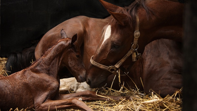 Examination of mares and fillies for breeding purposes