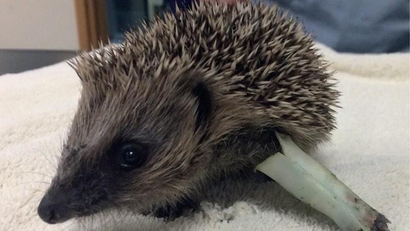 How to nurse wildlife patients
