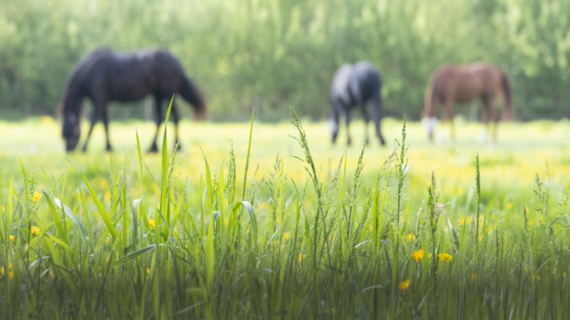 Optimised environments for horse health and wellbeing: the use of alternative grazing
