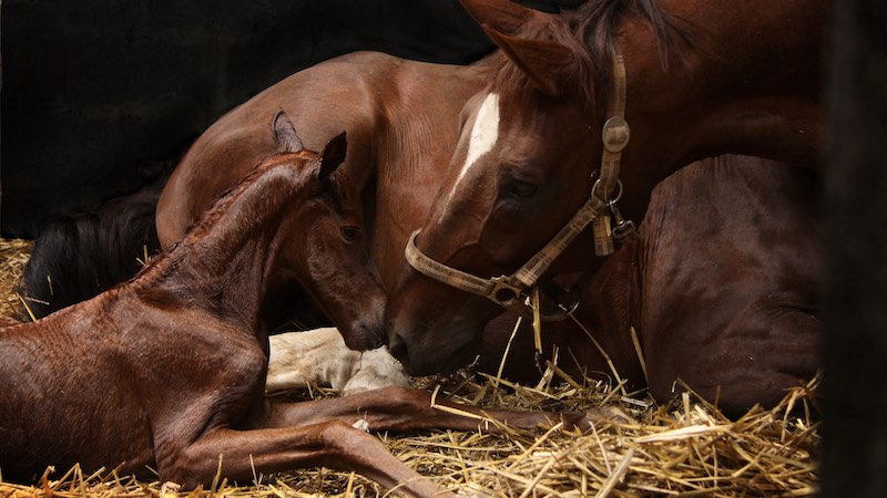 Don't forget the foal: the nursing requirements of hospitalised foals when the mare is the primary patient