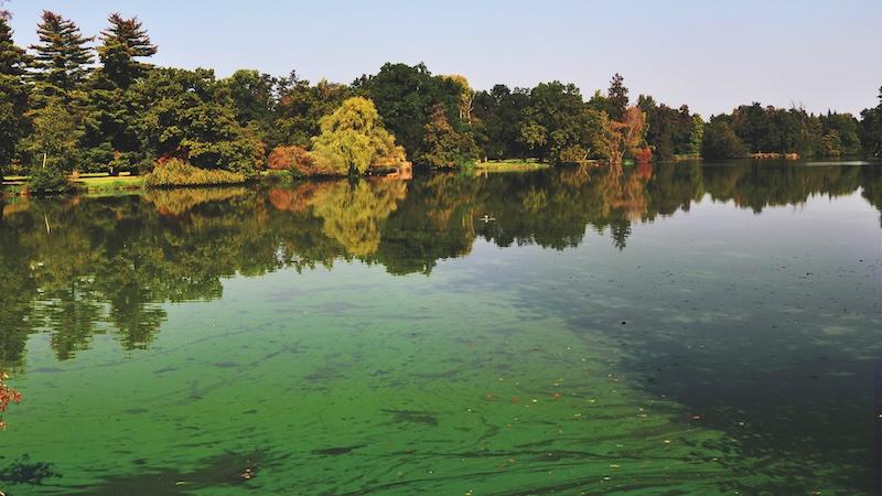 Cyanobacteria (blue-green algae) exposure in dogs