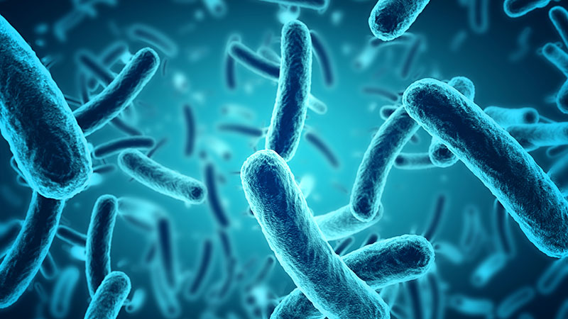 The oral microbiome's role in oral health