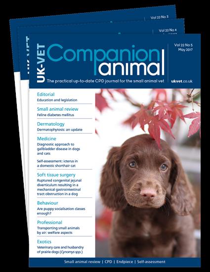 Picture of Companion Animal Print